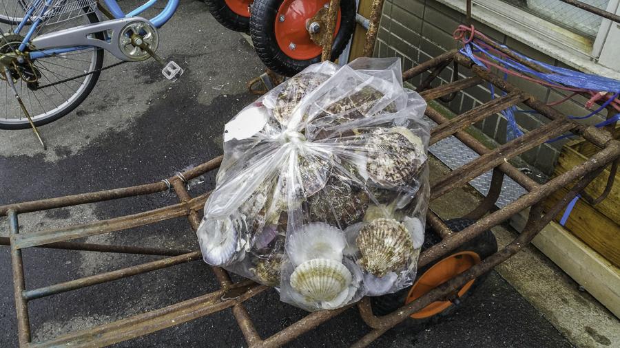 Furukawa market leftover oyster shells