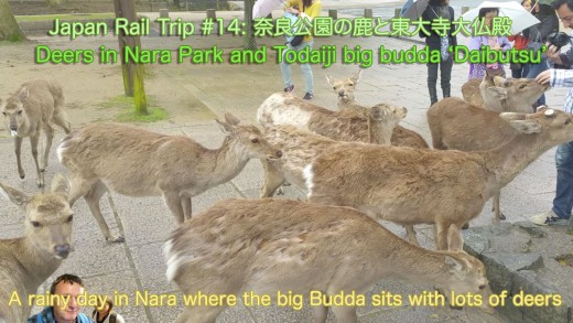 Visiting Nara buddha